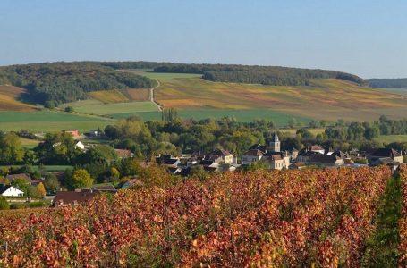 Weinindustrie Englischkurs