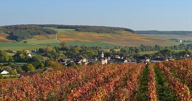 Weinindustrie Englischkurs Online Training